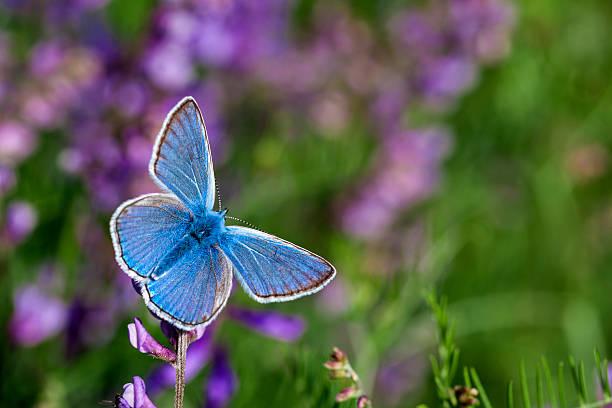 Blue butterfly on flower picture id483561094?b=1&k=6&m=483561094&s=612x612&w=0&h=nzxiszybpoer w7l8kmand7e3bmkupi5cet27wmdofg=