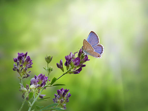 Blue butterfly on purple flower picture id481005790?b=1&k=6&m=481005790&s=612x612&w=0&h=vbcbo qhztbfrgbpms1svpkoihcuhqgvsk resavjzu=