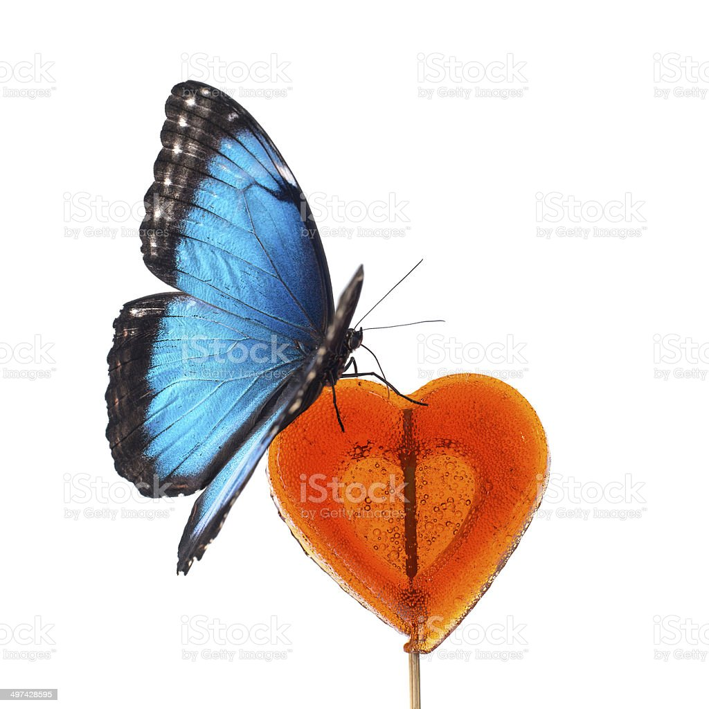 Blue butterfly on red candy stock photo