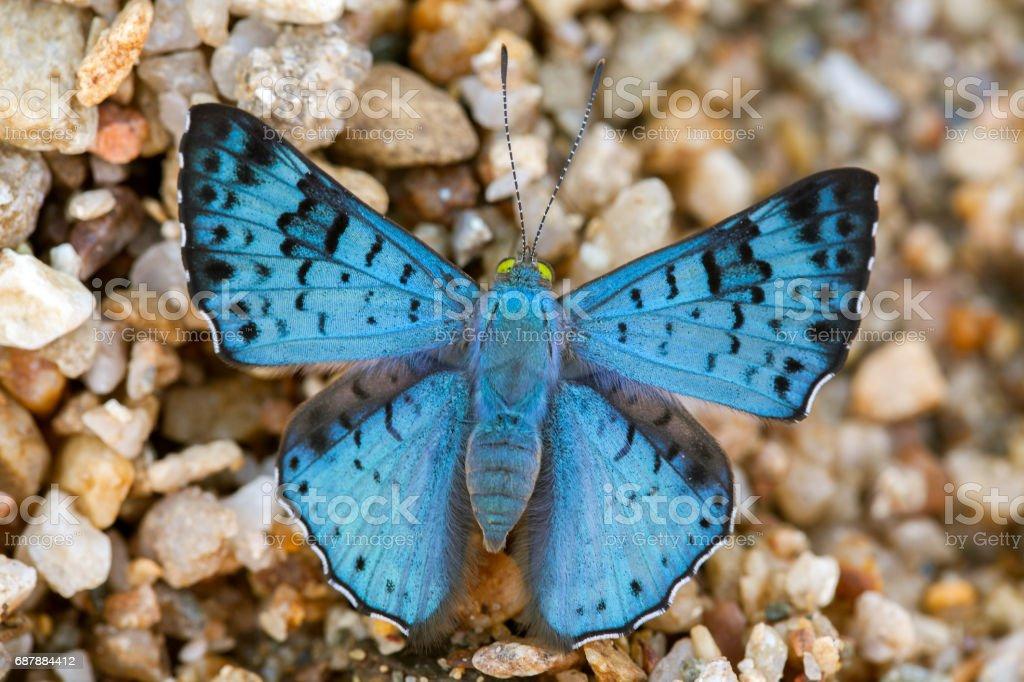 Blue butterfly on sand beach stock photo