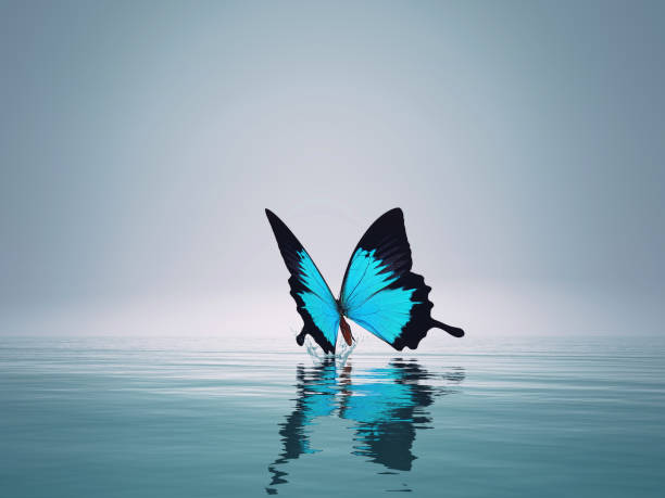 Blue butterfly on sea this is a 3d render illustration picture id1083724440?b=1&k=6&m=1083724440&s=612x612&w=0&h=1oo8pctp8hpvsy o5 ufixrpl6sdytflxbq07 zcons=