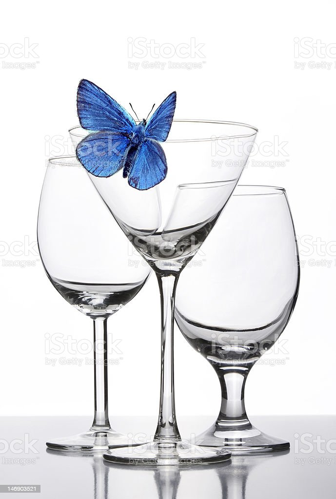 blue butterfly on the glass stock photo