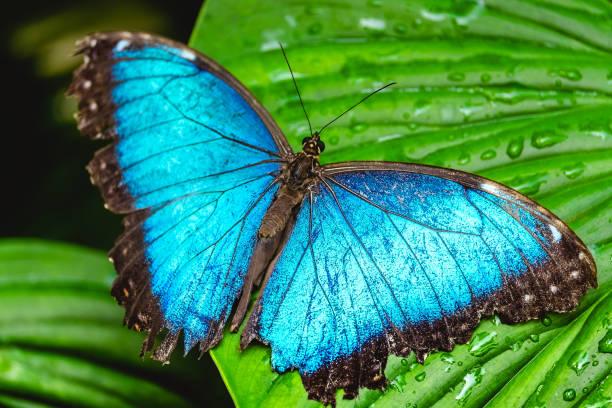 Blue butterfly on the leaf picture id805031310?b=1&k=6&m=805031310&s=612x612&w=0&h=gz3okdi7jqfq5b4jiwbqtmh2fgav6 xcmmvx23ucuro=