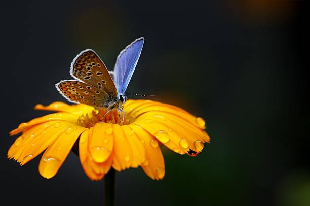 Blue butterfly on yellow flower picture id545092880?b=1&k=6&m=545092880&s=612x612&w=0&h= cp78cbjsy271jpu4hjsqtplk1f c7vouj6r7xcytkq=