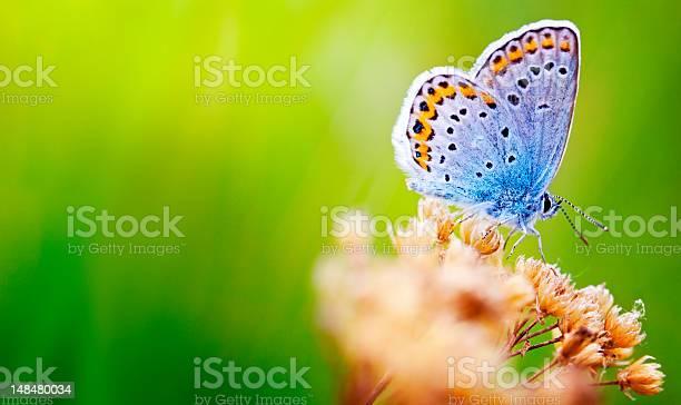 Blue butterfly picture id148480034?b=1&k=6&m=148480034&s=612x612&h=yxesd8hachuqzps gz7h1m3kycsmiutfynt uy97zvw=