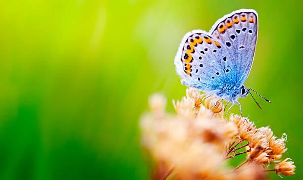 Blue butterfly picture id148480034?b=1&k=6&m=148480034&s=612x612&w=0&h=i8eap8ge4akwyi jf4q7x3k01srtfgvpzeyitqryxli=