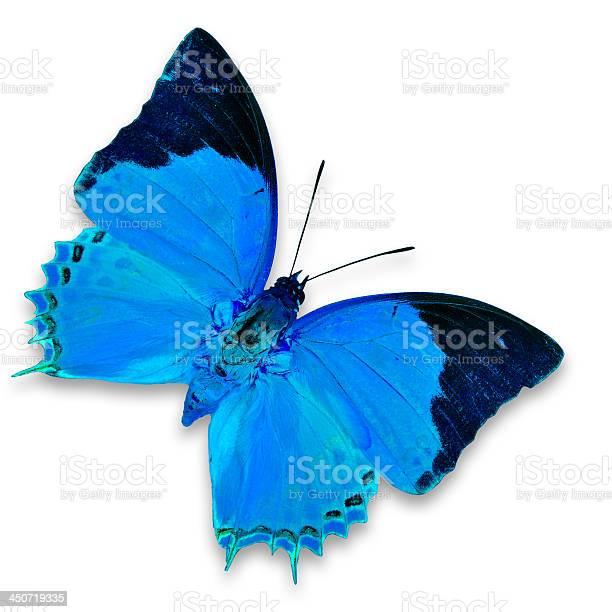 Blue butterfly picture id450719335?b=1&k=6&m=450719335&s=612x612&h=xs liz7yszhpmi0azsmfqwvb h0wpahyemiuxvfhjpi=