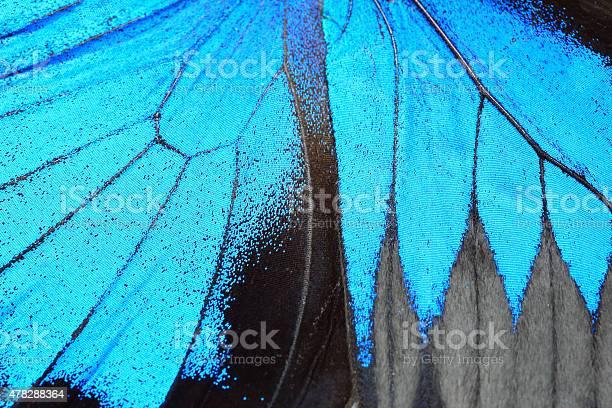 Blue butterfly wing picture id478288364?b=1&k=6&m=478288364&s=612x612&h=6bb6c3cbqrznlp9zw02wvzon cmwc5 u5 c6m6ldjum=