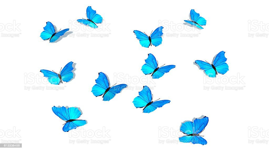 blue butterflys isolated on white – Foto