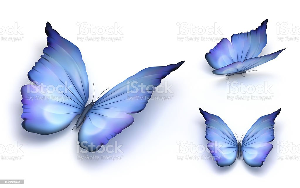 Blue Butterfly's on white background stock photo