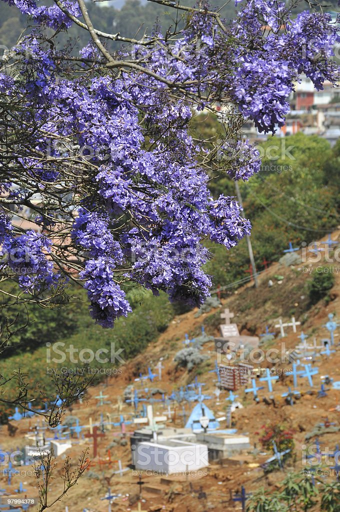 Blue cemetery royalty-free stock photo