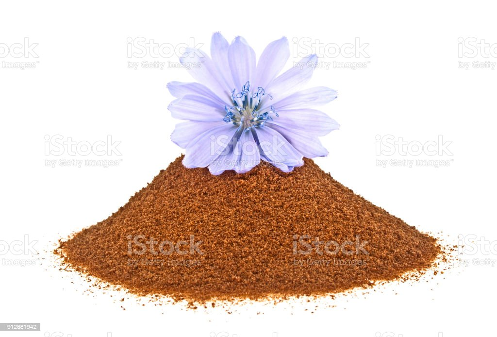 Blue chicory flower and powder of instant chicory isolated on a white background. Cichorium intybus. stock photo