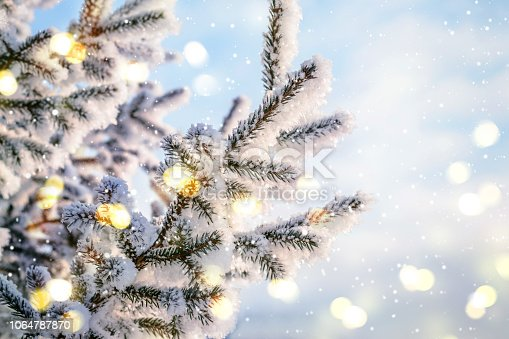 Blue Christmas Holiday Winter Background. Natural coniferous branches in hoarfrost with lights and snow.