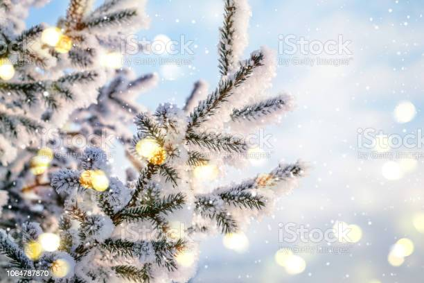 Photo of Blue Christmas Winter Background. Natural coniferous branches in hoarfrost with lights and snow