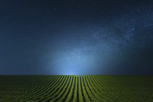 Blue clear Night over the vineyards.