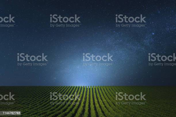 Photo of Blue clear Night over the vineyards.