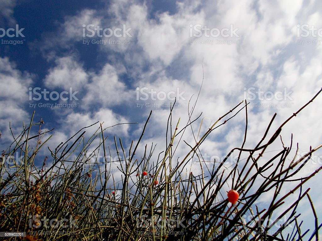 Blue cloudy sky behind wild plants stock photo