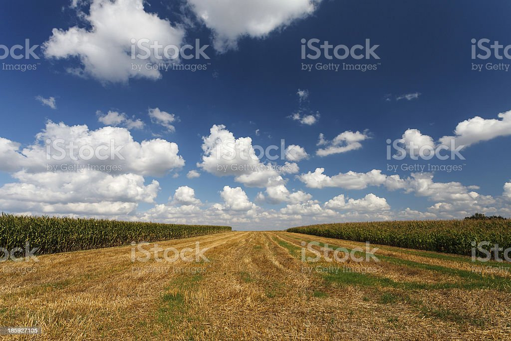 Blue cloudy sky over the stubble stock photo