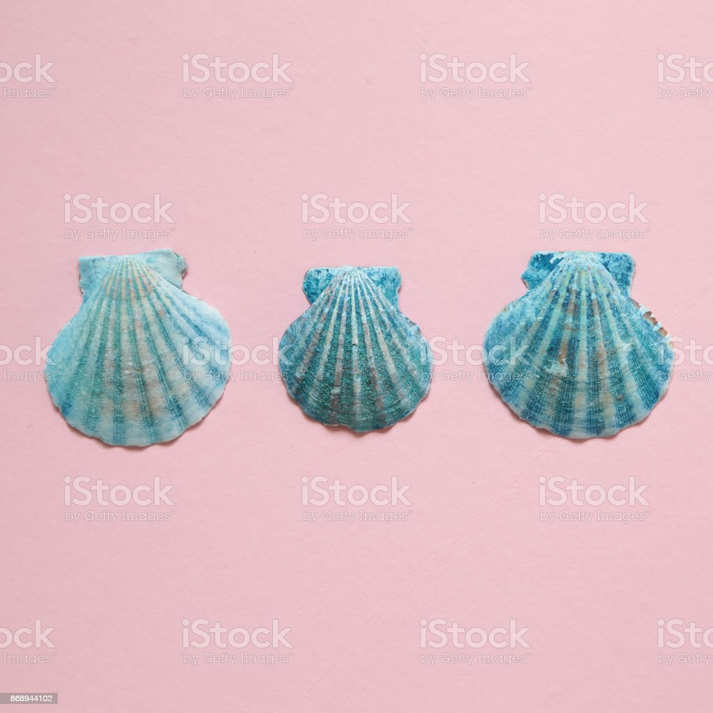 Blue color seashell on pink background stock photo