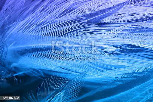 istock Blue color trends chicken feather texture background 636487608