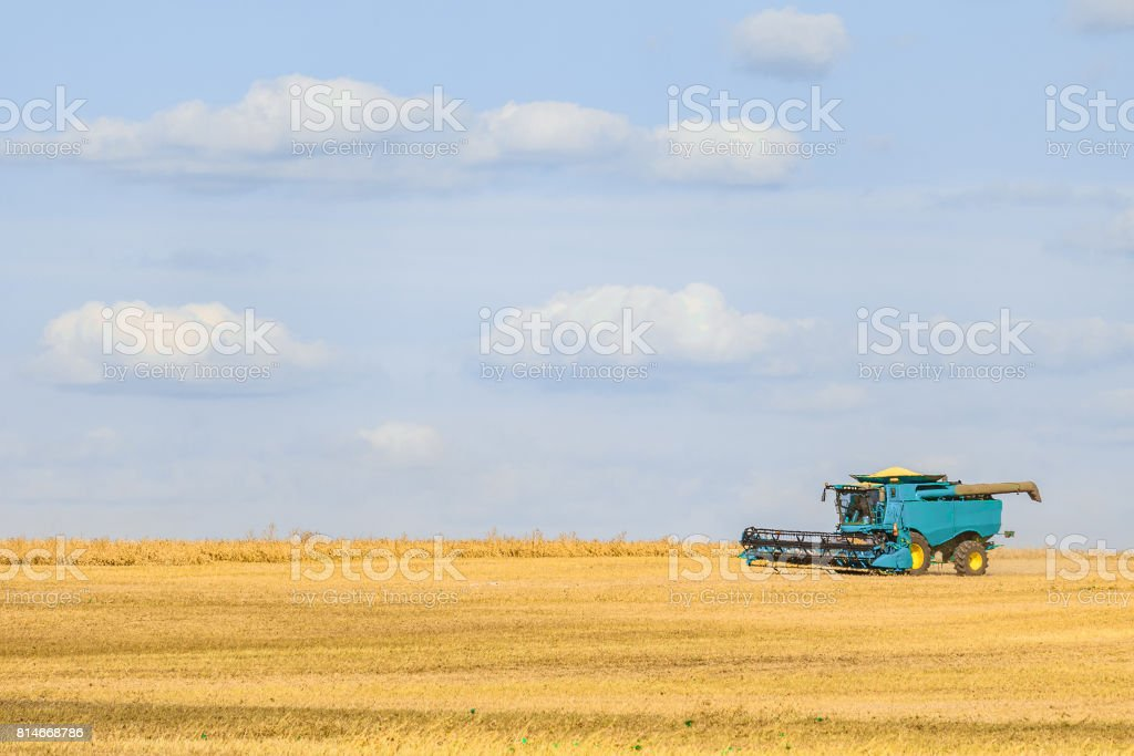 Blue combine harvester working on the harvest in a field. Agricultural background with copy space. stock photo