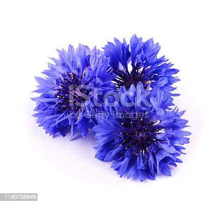 Blue cornflower herb isolated on white background