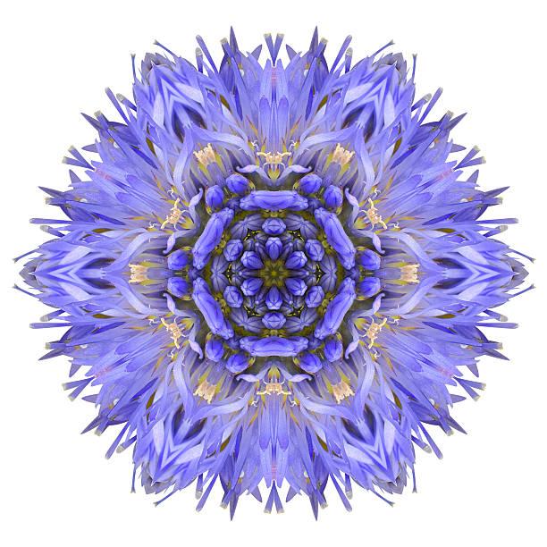 blue kornblume mandala blumen kaleidoskop, isoliert auf weiss - buddhist tattoos stock-fotos und bilder