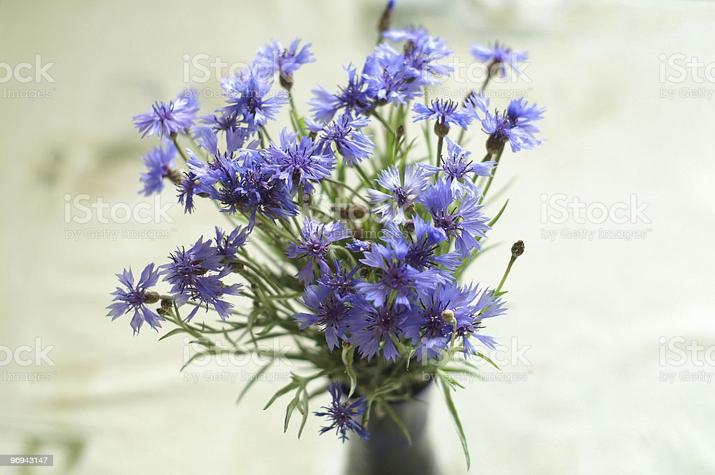 Blue cornflowers in vase royalty-free stock photo