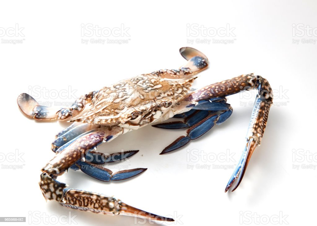 blue crab isolated on white background - Royalty-free Animal Stock Photo