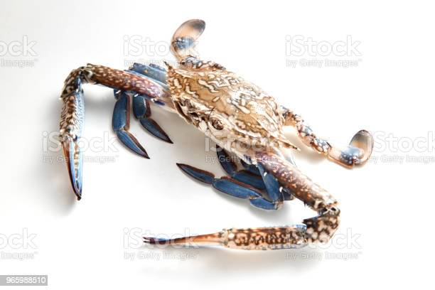 Blue Crab Isolated On White Background Stock Photo - Download Image Now