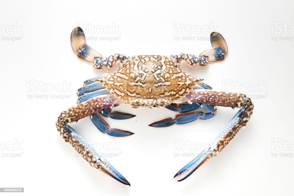 blauwe krab geïsoleerd op witte achtergrond - Royalty-free Blauw Stockfoto