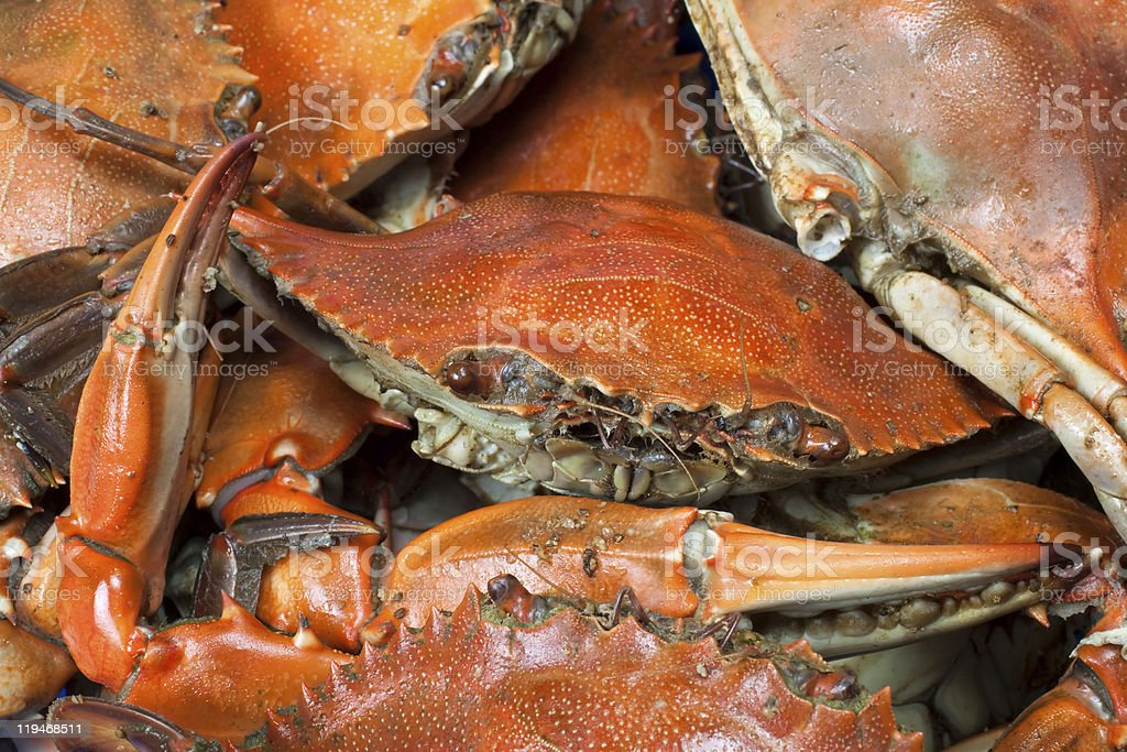 Blue Crab Macro Background stock photo