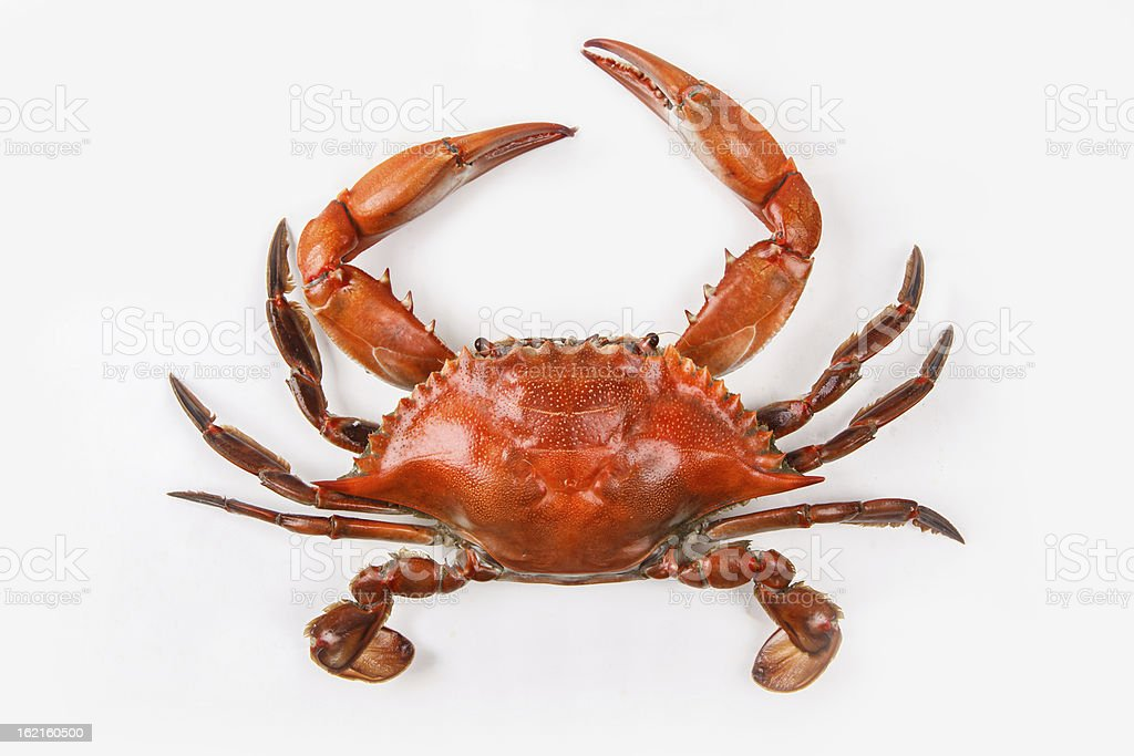 Blue crab on white background that has been cooked stock photo