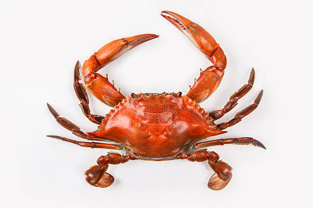 blue crab on white background that has been cooked - gestoomd stockfoto's en -beelden