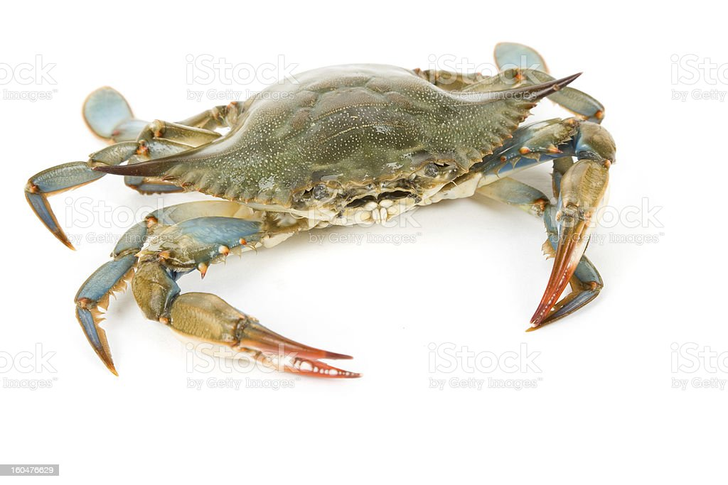 Blue Crab – Foto