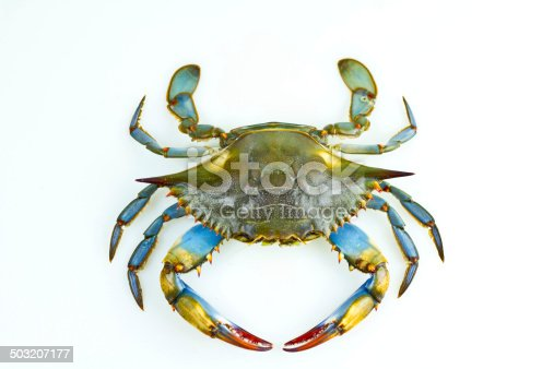 Fresh blue crab isolated against a neutral background.