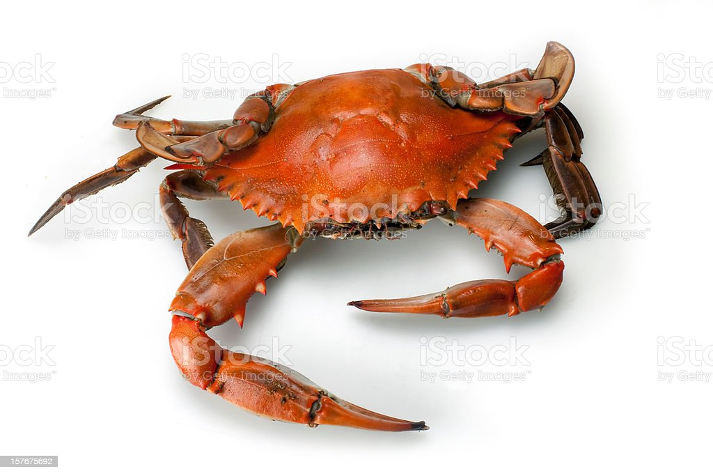Blue Crab Single top view Isolated on White Background stock photo