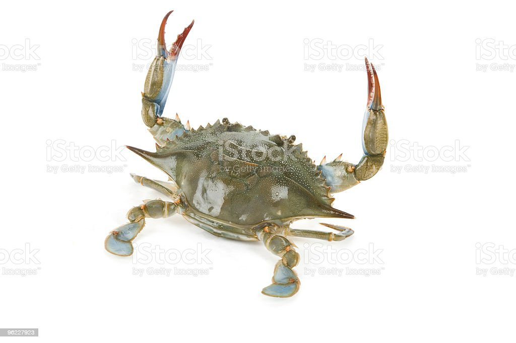 Blue crab sitting on white background stock photo