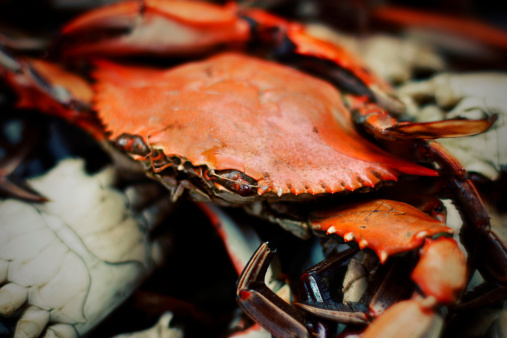 Blue Crab Steamed Macro Stock Photo - Download Image Now