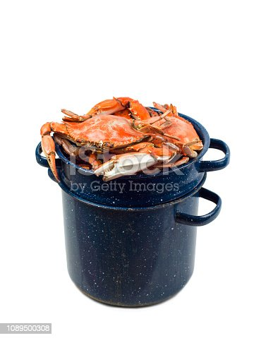 A bunch of chesapeake bay blue crabs that have been steamed in a steaming pot. The now orange crabs are piled high and are coming out of the top. The blue aluminum cooking pot is a nice contrast to the bright orange freshly cooked seafood. The scene is shot and isolated on a white background and has a clipping path. A great shot for fresh seafood dinner ingredient Photos or having to do with the fishing industry.