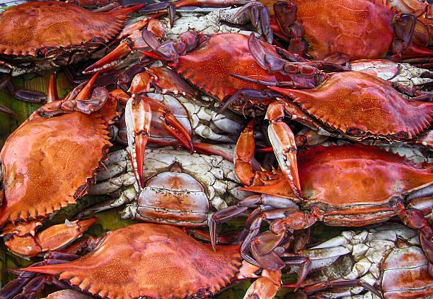 crabes bleus - crabe photos et images de collection
