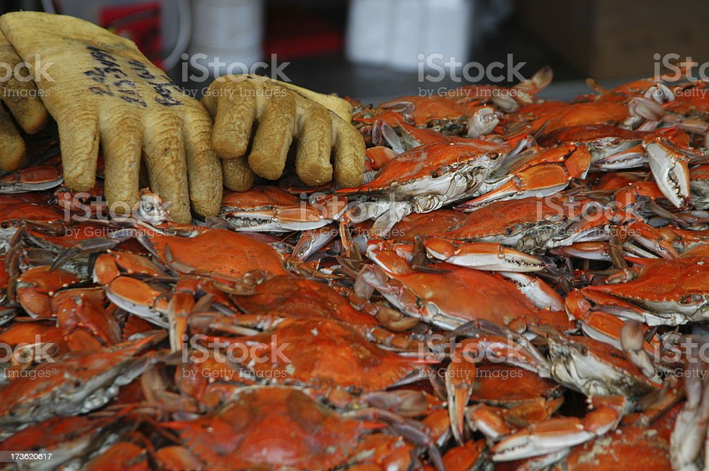 Blue Crabs: Steamed stock photo