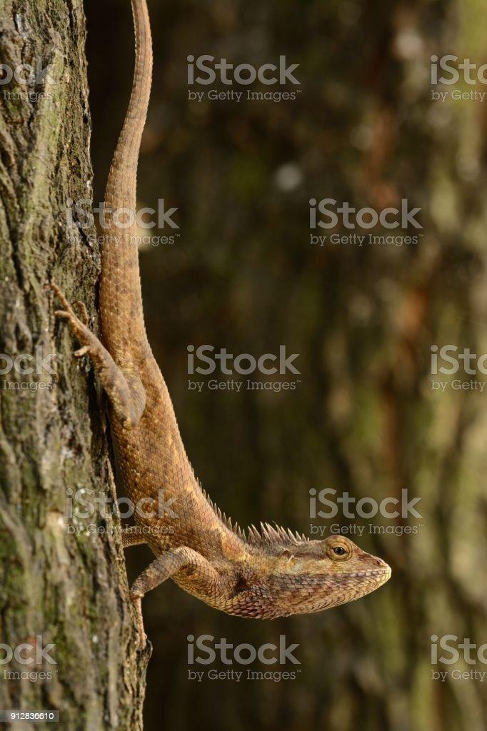 Lujo Anatomía Gecko Con Cresta Imagen - Anatomía de Las Imágenesdel ...