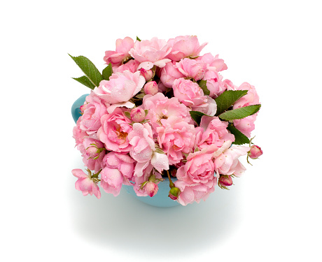 blue cup full of small pink roses over white