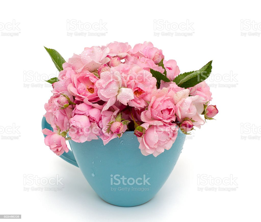 blue cup full of small pink roses over white stock photo