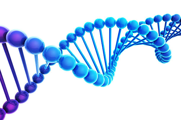 Blue DNA Helix on white background CG model of DNA helix model stock pictures, royalty-free photos & images