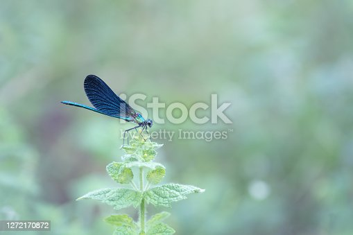 Blue dragonfly blur background with bokeh
