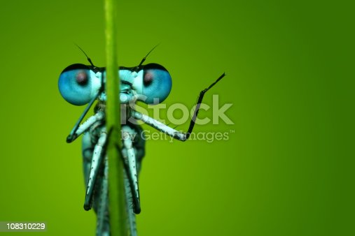 istock Blue Dragonfly Sitting on Blade of Grass 108310229