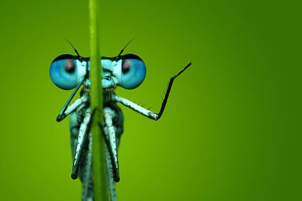 Blue dragonfly sitting on blade of grass picture id108310229?b=1&k=6&m=108310229&s=612x612&w=0&h=fwqbbd4xxo4ai ksxya00d94e3pqhgalkdf zrfd3 q=