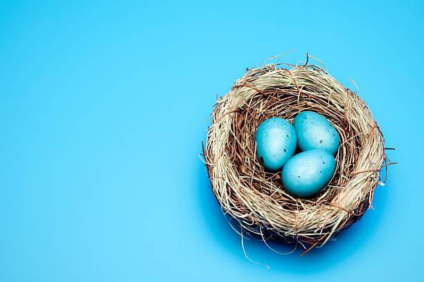 blue easter eggs Close up of three blue easter eggs. nest egg stock pictures, royalty-free photos & images